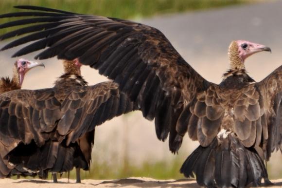 Great birds!