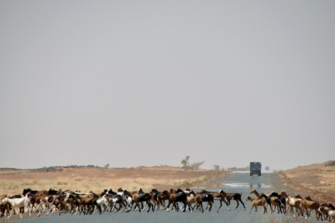 The wildlife of Mauritania