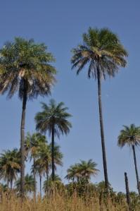 Palms waving at me