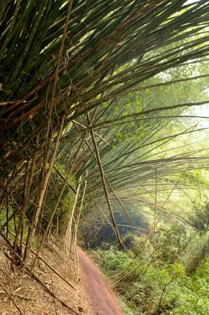 Bamboo Banga