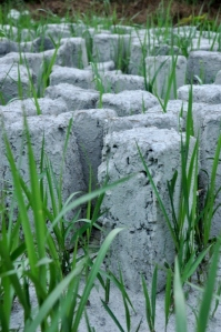 Stone with Grass