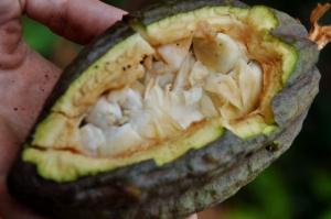 Edible Inside Cacoa