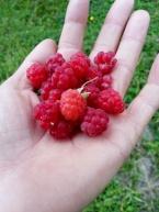 Fruity Frambozen