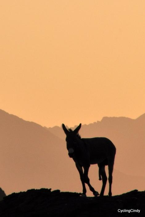 5 legged Donkey