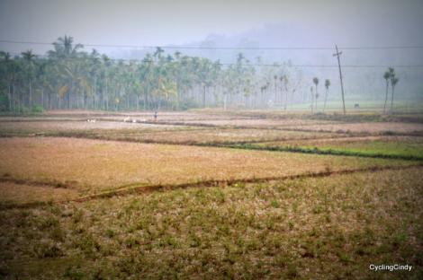 Early Fields