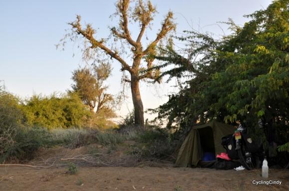Thorny Wadi Camp