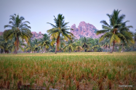 Peacefull Fields