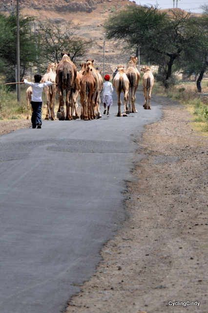 Camel Train. Not on Ringroad
