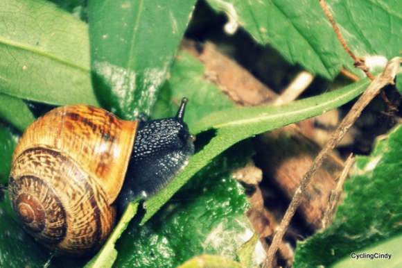 Not only a thousands mosquitoes, snails too. Everywhere!