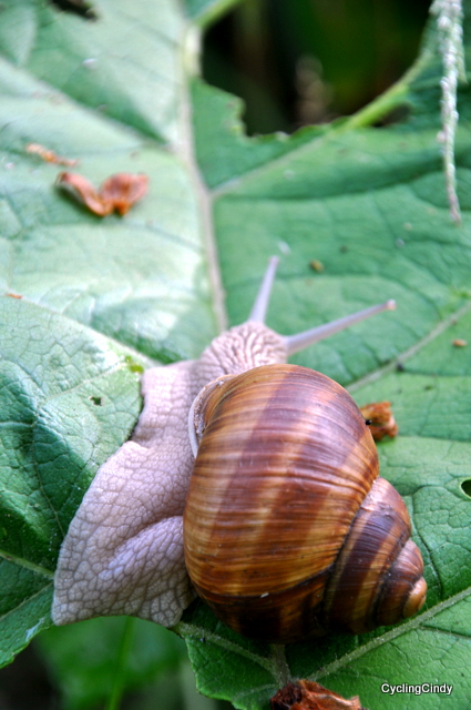 Rain makes the snails come out