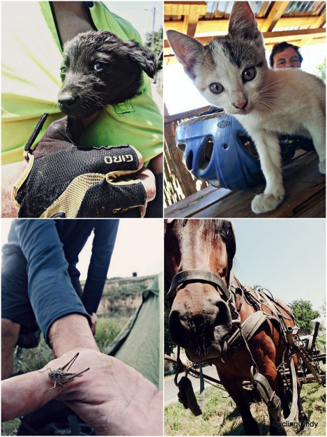 Stray puppy, taken care for cat, insects and a horse in rest: every day life is like this
