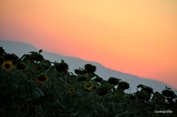 Sunset over the sunflowers. How double beautiful