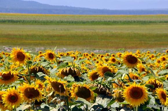 Most of Romania landscape