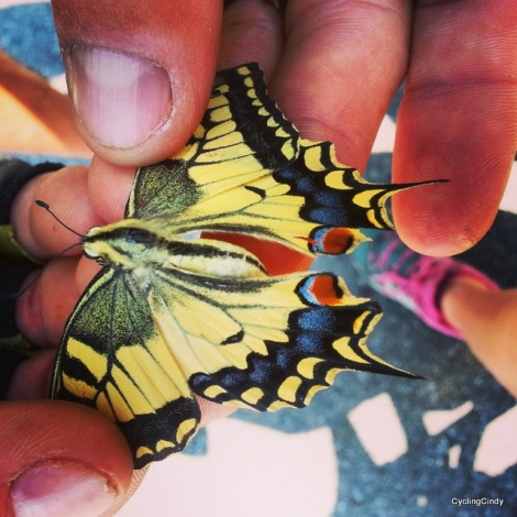 Beautiful big butterfly,dead along the road