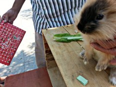 Tonton special rabbit has picked a slip!