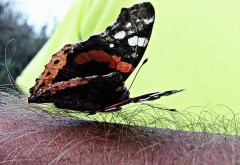 Butterfly on hairy ground
