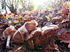 Camp between apple trees and mushrooms