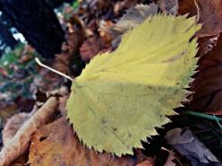 Fall has arrived in Croatia