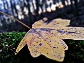 Laying on moss