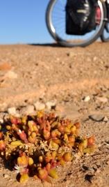Details in Sahara
