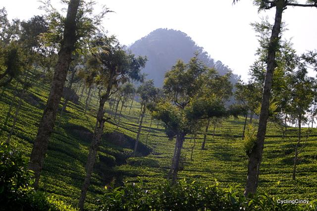 Conoor, South India
