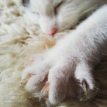 My sweet cuddling darling