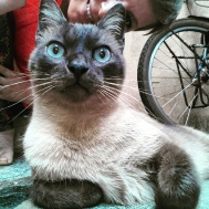 Pitu, the cat in the hotel of Ponta Pora