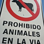 Forbidden to have animals on the road. But of course there are plenty of cows roaming around