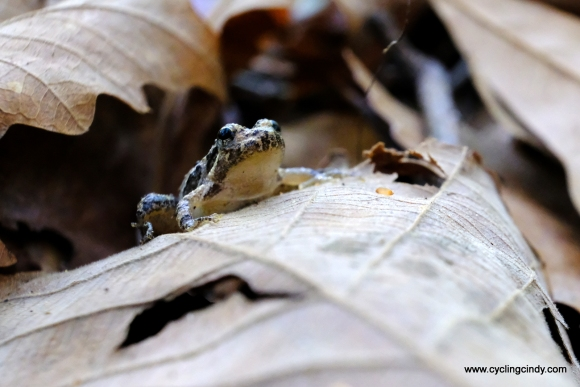 From every angle a frog is intriguing