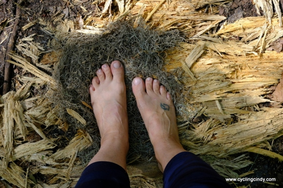 Tree hair to keep the washed feet clean